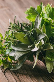 GROSSISTE HERBES AROMATIQUES